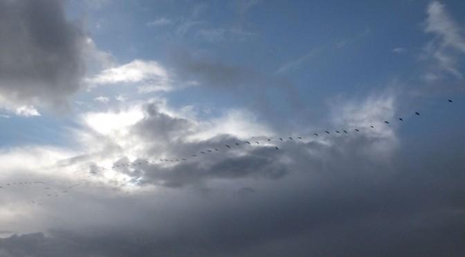 Vol de grues entre les nuages ensoleillés