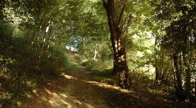 Chemin forestier, 15e dimanche ordinaire B