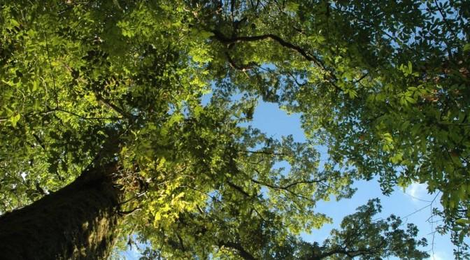 Pourle 19e dimanche ordinaire B, des branches images de la vie donnée par Dieu