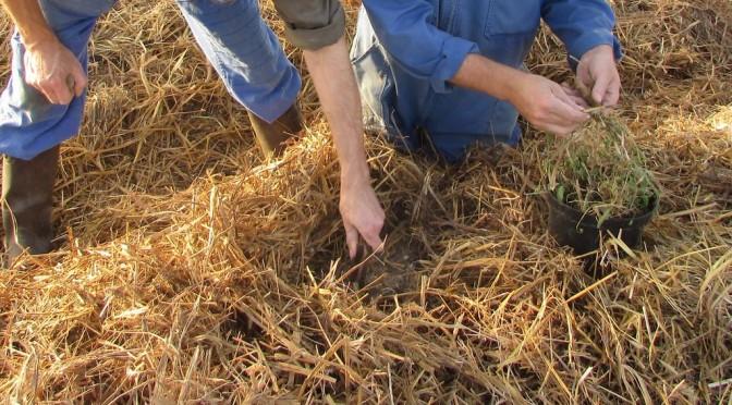 bras et mains de frères travaillant dans les plantations